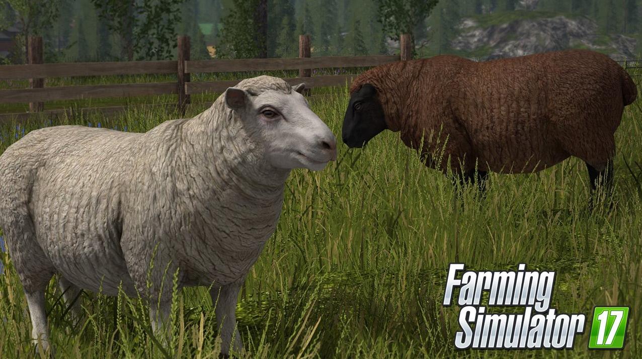 Разведение животных в Farming Simulator 2017: овцы
