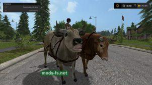 hard-working-oxen_2