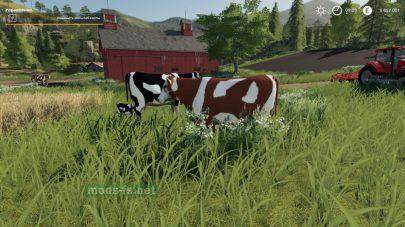 Объект семейство коров для FS 2019